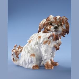 Lap-dog