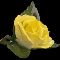 Роза на листе