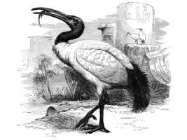 Птица Ибис на вазах Майсен