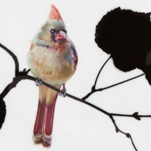 Птицы и Meissen